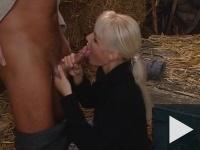 Istálló-szex
